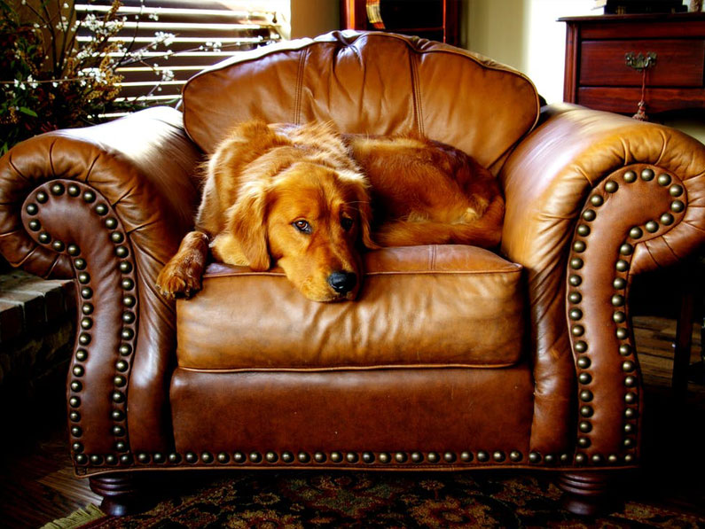 How to Stop Your Pets from Ruining Your Furniture
