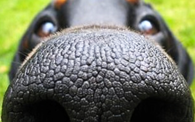 Why a dry nose doesn't always mean that your dog is sick