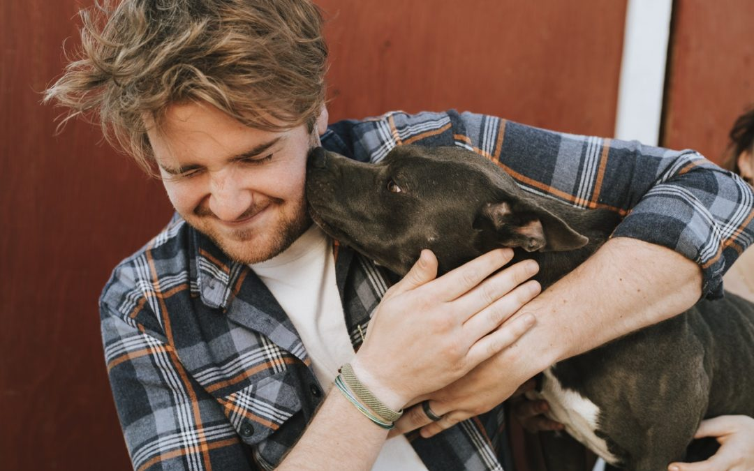 Five reasons to adopt an adult dog