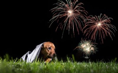 Why you should avoid fireworks during new years eve
