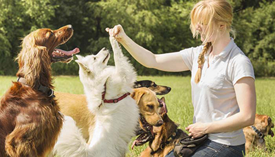 Best options for dog sitter in hampstead