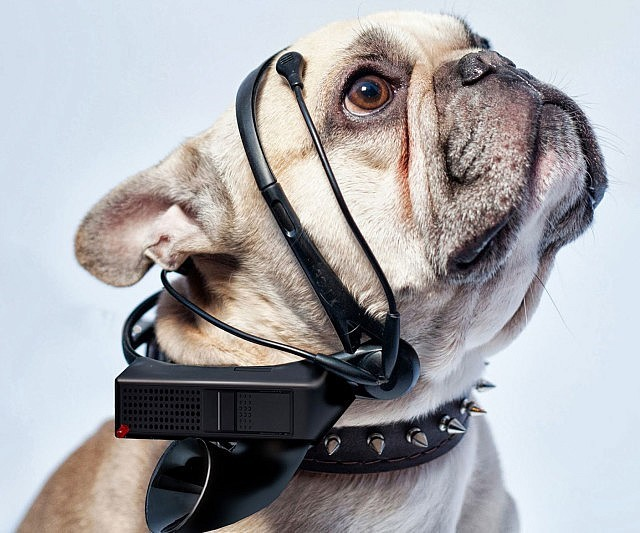 10 Crazy Dog Inventions You Won't Believe Actually Exist