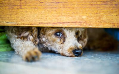 Pet separation anxiety and how to deal with it