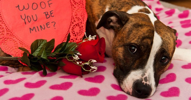 6 Fun Ways To Celebrate Valentines Day With Your Dog!