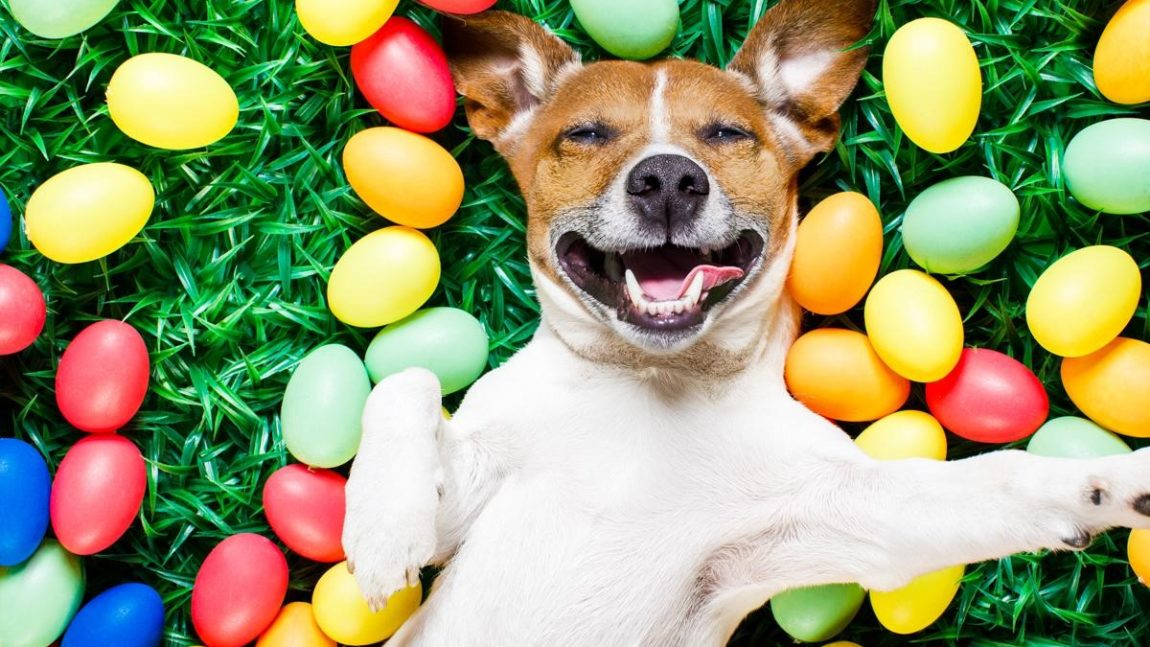 FUN-FILLED EASTER ACTIVITIES WITH YOUR DOG