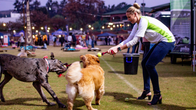 Friday Night Entertainment for Your Dog with Deep Roots Night Market