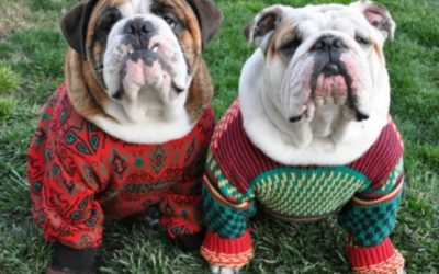 Cute Dog Sweater Ideas to keep your Furry Friends Warm this winter!