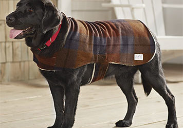 DOG WINTER WARMERS: WINTER SAFETY TIPS FOR YOUR DOGS
