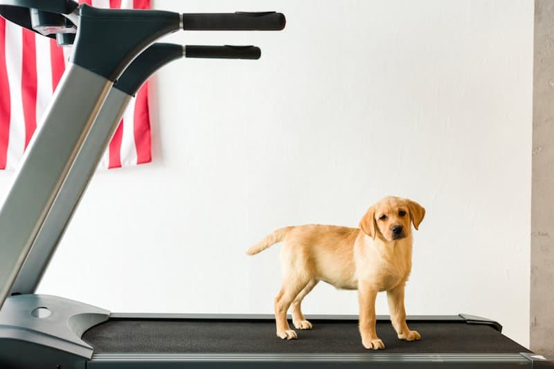 FUN WAYS TO EXERCISE YOUR POOCH