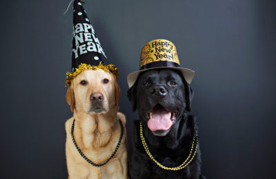 6 New Year's Resolutions for Your Dogs