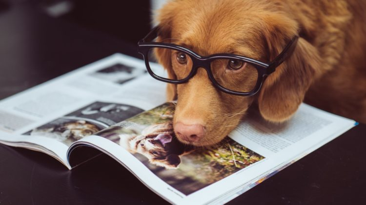 How Smart is My Dog? Try This Test!