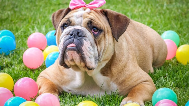 What to Do With Your Dog post-Easter